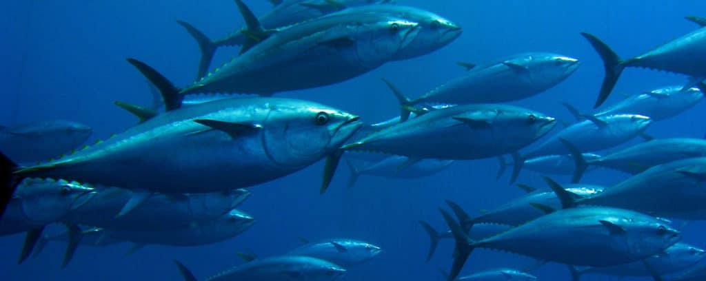 Tuniak utoci na farmy
